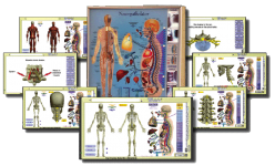Neuropatholator Wall Chart and Computer Software