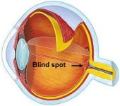 Physiologic Blind Spot Imager Software