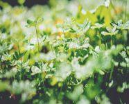 Herbs & Homeopathy