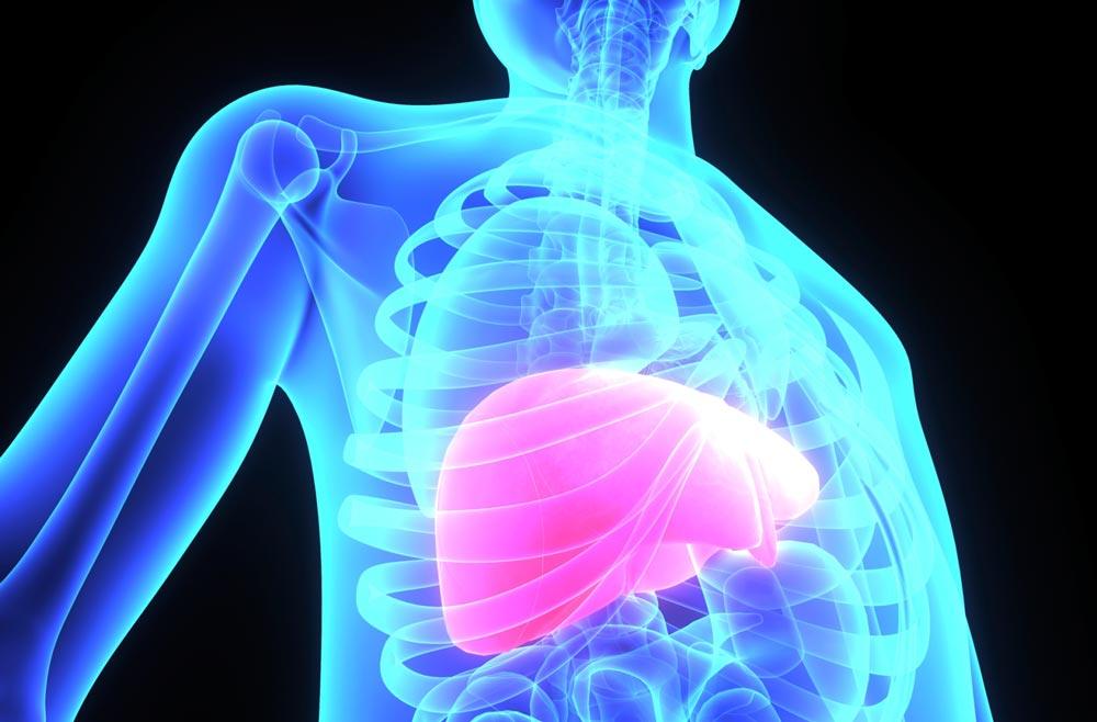 Healthy-liver-web