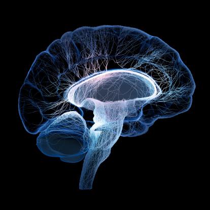 CE_brain